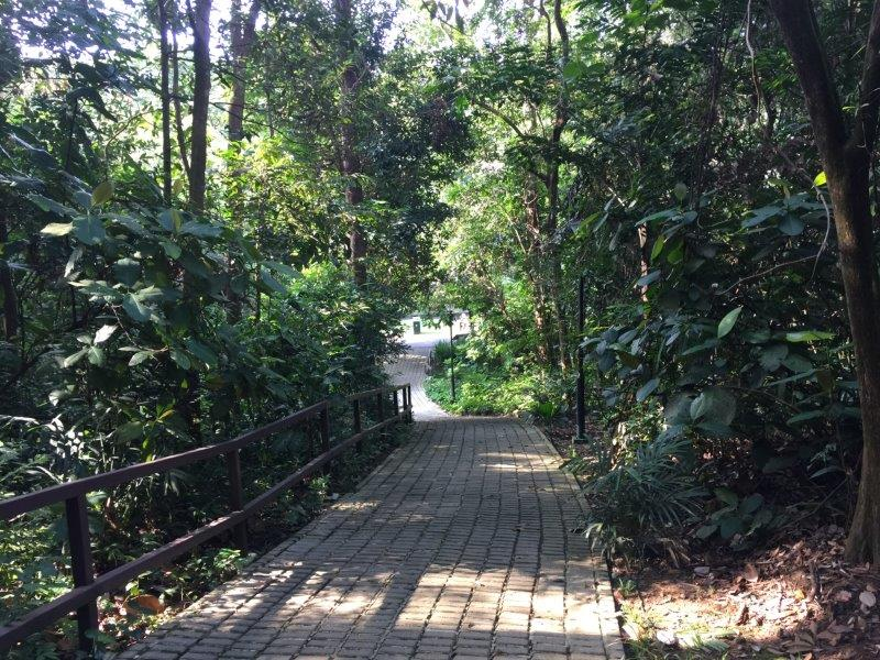 bukit batok nature park undulating paths